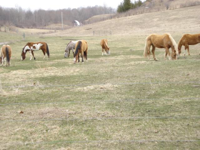 Horses on M-22 - 1