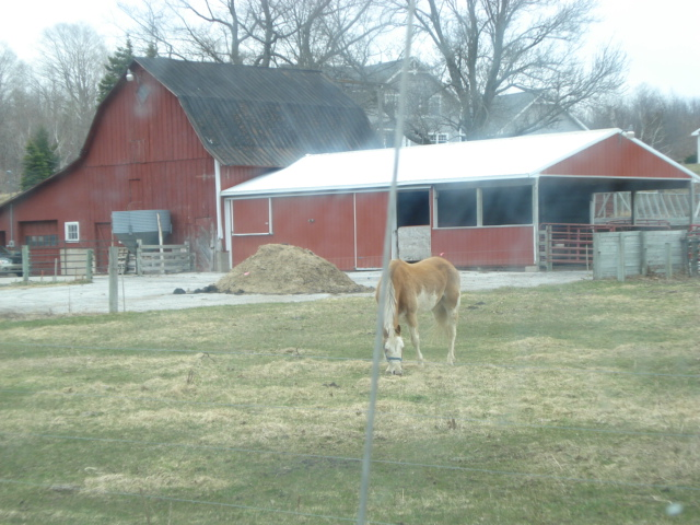 Horses at the Red Barn Farm on M-22