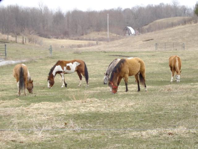 Horses on M-22