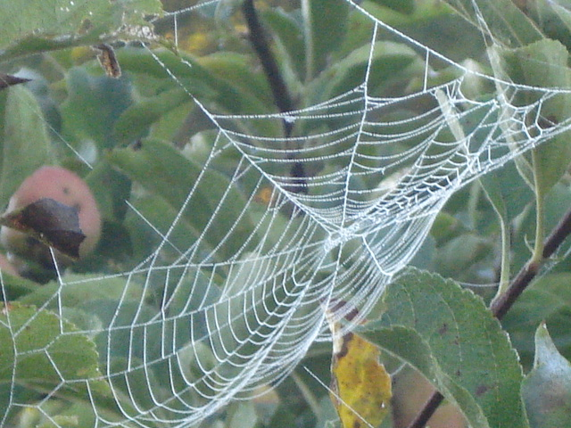 How about this in my apple tree?