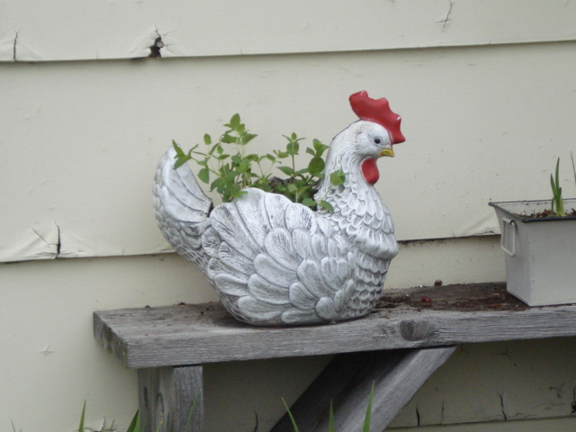 one of the planter chickens