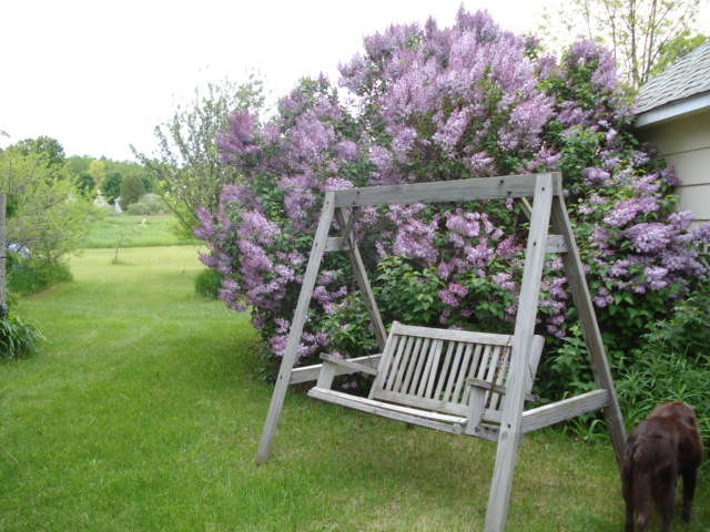 I lourve me some lilacs. Some of my favorite spring things