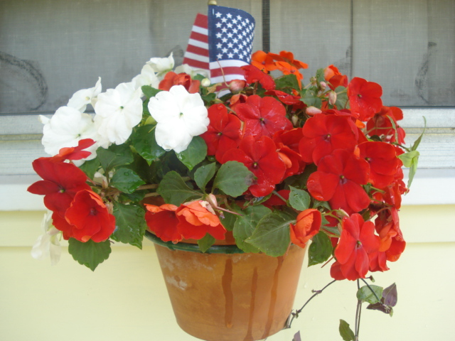 Impatiens cottage 4