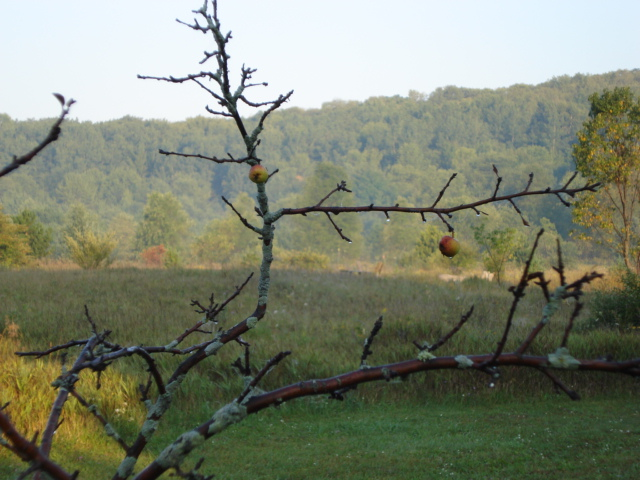 the artsy apple tree