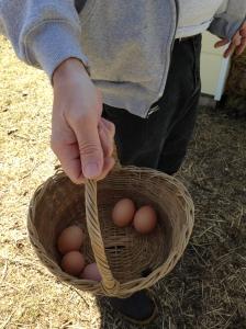 Wayfarer eggs